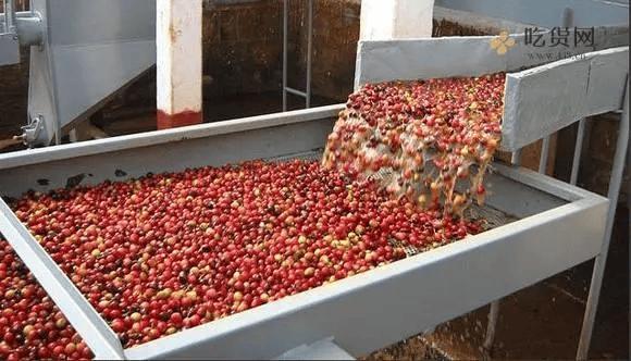 一篇文章让你了解咖啡豆插图5
