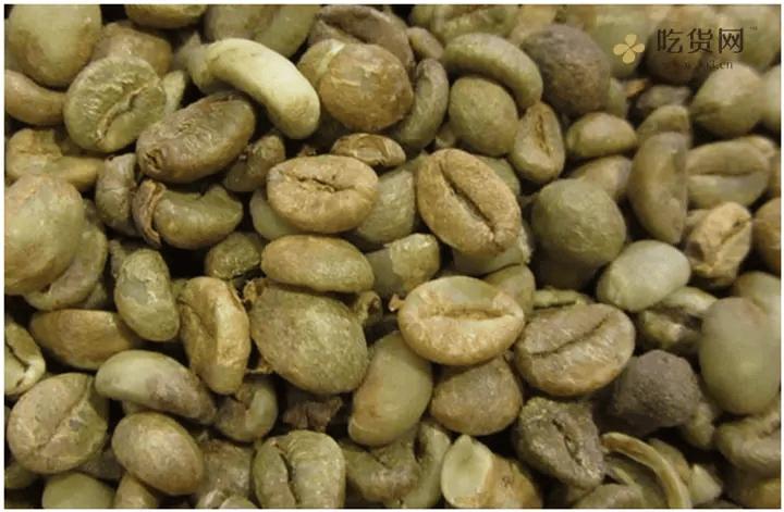 一篇文章让你了解咖啡豆插图4