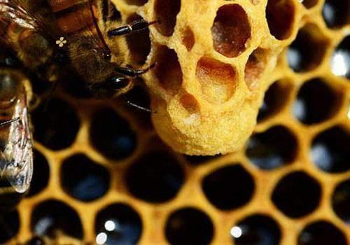 纯蜂蜜结团怎样才能融化 纯蜂蜜吃完有哪些健康保健作用缩略图