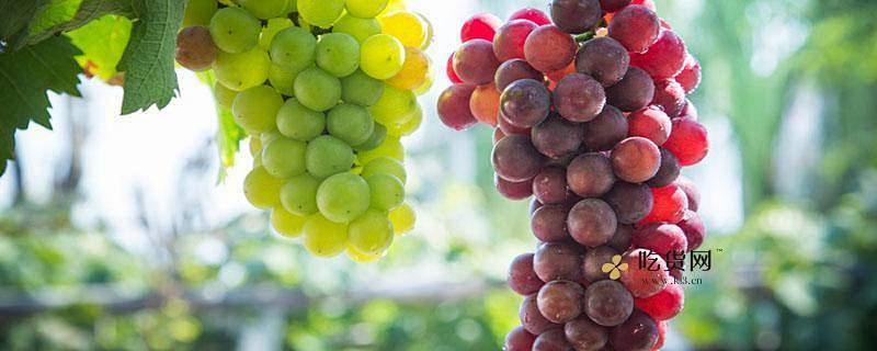 女性经常吃葡萄有什么好处,女性晚上吃葡萄好吗缩略图