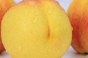 黄桃能够储存多久,黄桃一天吃好多个适合缩略图