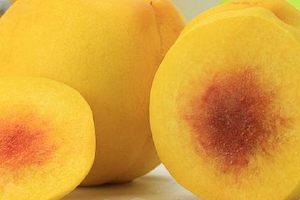 黄桃是转基因水稻新鲜水果吗,黄桃是哪个时节的新鲜水果缩略图