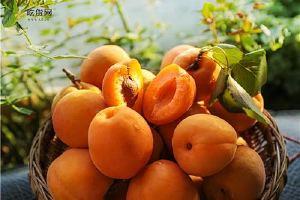 水蜜桃为啥盐泡,水蜜桃和水蜜桃哪一个美味缩略图