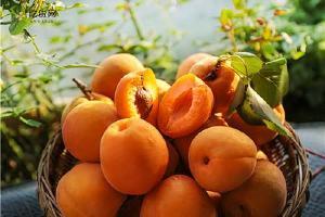 黄桃是什么季节的新鲜水果,黄桃和甜瓜能一起吃吗缩略图