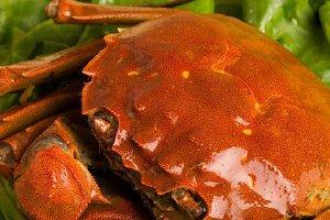 吃完大闸蟹后吃什么水果好,吃了大闸蟹吃柿子该怎么办缩略图
