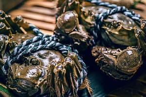 大闸蟹怎样保存死不了,螃蟹死了怎么保存一天缩略图