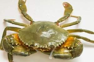 青蟹和大闸蟹的差别,青蟹归属于海产品吗缩略图