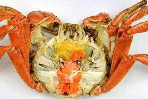 大闸蟹能和生鸡蛋一起吃吗,大闸蟹和生鸡蛋一起吃有哪些好处呢缩略图