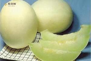 甜瓜和哈密瓜的差别,甜瓜是哈密瓜吗缩略图