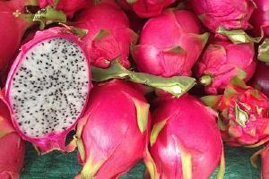 吃火龙果容易上火或是去火,火龙果能治疗便秘吗缩略图