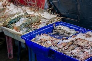 皮皮虾之后多长时间能吃,皮皮虾去世后多长时间不能吃缩略图