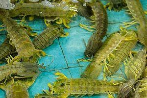 皮皮虾和桂圆能一起吃吗,皮皮虾不可以和什么一起吃缩略图