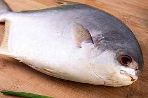 金鲳鱼怎么处理整洁,金鲳鱼怎么清洗缩略图