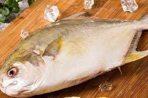 如何选择金鲳鱼,金鲳鱼有哪些营养成分缩略图