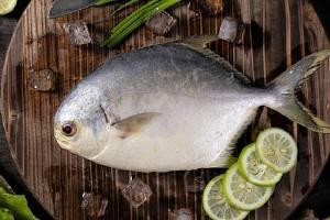 金鲳鱼是否有鱼鳞片,金鲳鱼要不要刮鳞缩略图
