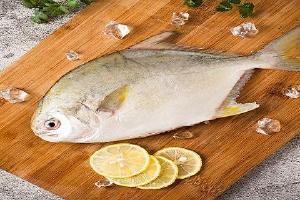 哺乳期能吃金鲳鱼干啥,哺乳期间吃金鲳鱼的益处缩略图