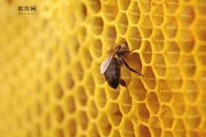 蜂胶何时吃最好是,蜂胶什么时候吃最好是缩略图
