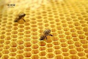 吃蜂胶有哪些好处呢,吃蜂胶有什么作用,吃蜂胶的益处缩略图