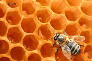 蜂胶吃多了会怎么样,蜂胶吃多了大会上火吗缩略图