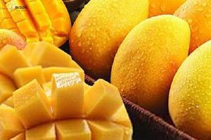 芒果里含有什么营养 芒果吃了有什么功效缩略图