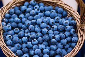 什么情况不能吃蓝莓,蓝莓的食用方法忌讳缩略图