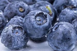 蓝莓瓜瓤是什么颜色的,怎么判断蓝莓熟透缩略图