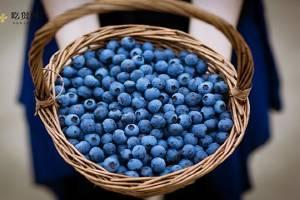 鲜蓝莓一天吃是多少为宜,蓝莓吃多了会怎么样缩略图