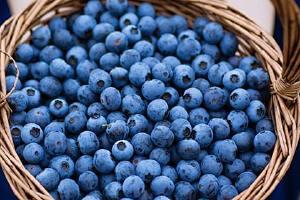 蓝莓吃多了会如何,蓝莓吃多了该怎么办缩略图