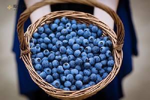 如何选择新鮮蓝莓,蓝莓怎么洗才整洁缩略图