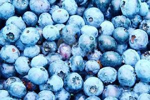 蓝莓泡药酒可泡多久,蓝莓泡药酒多久能喝缩略图