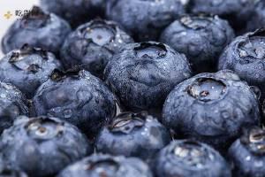 怎么制作蓝莓酒,喝蓝莓酒有哪些好处呢缩略图