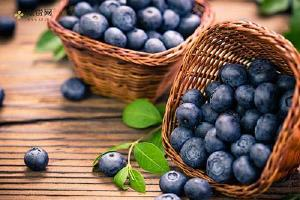 吃蓝莓会皮肤过敏吗,吃蓝莓过敏了怎么办缩略图