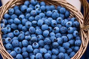 蓝莓为何非常容易长霉,蓝莓有酒味是长霉吗缩略图