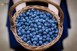 蓝莓吃完对人体有什么作用,服用蓝莓的益处缩略图