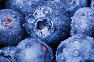 蓝莓能够泡药酒吗,蓝莓泡药酒有什么功效缩略图