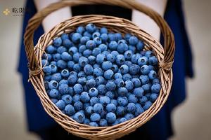 蓝莓和枸杞子能够一起吃吗,野生黑枸杞和蓝莓关键有哪些不一样缩略图