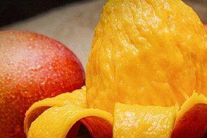 芒果和椰汁能一起吃吗,椰汁不能和什么一起吃缩略图