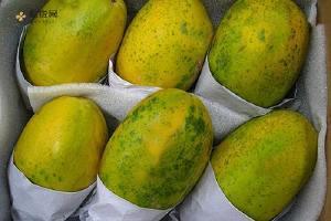 木瓜能直接生吃吗,木瓜崔熟的方式缩略图