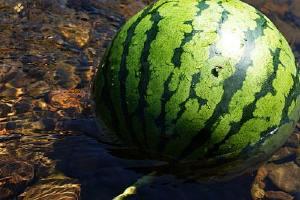 隔夜的西瓜能吃吗,隔夜的西瓜放在冰箱能吃吗,西瓜放冰箱隔夜能吃吗缩略图