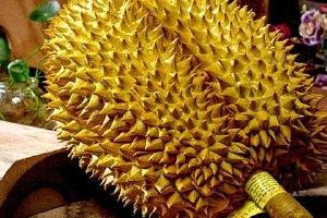 吃一个榴莲等同于吃几个鸡,吃一个榴莲是否会发胖缩略图
