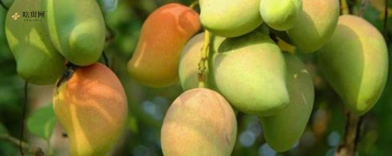 吃芒果有什么好处,怎样给芒果去皮插图