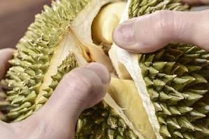 榴莲长毛了还能吃吗,一不小心吃完长霉的榴莲该怎么办缩略图
