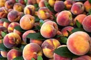 水蜜桃能够放电冰箱吗 原先水蜜桃那样储存更美味缩略图
