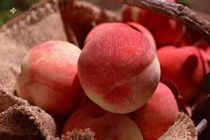 吃水蜜桃大会上火吗,水蜜桃容易上火吗,水蜜桃大会上火吗缩略图