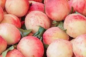 桃子不洗吃完会怎么样,桃子冷水洗可以吃吗缩略图