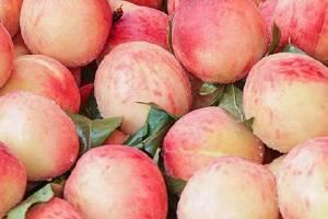 桃子降火或是容易上火,桃子和药能一起吃吗缩略图