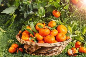 咸柑桔泡水喝的功效,咸柑桔怎么做好吃缩略图