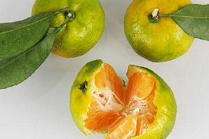 吃橘子牙酸怎么办,胃胀痛能吃橘子吗缩略图