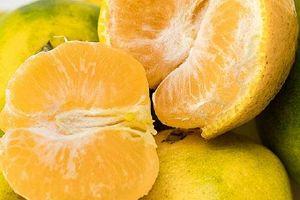 减肥瘦身可以吃橘子吗,橘子是增胖或是减肥瘦身缩略图