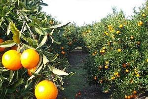 橘子怎么保存,怎样更长期储存橘子缩略图